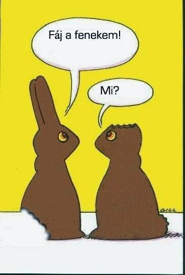 Csokinyuszik.jpg